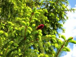 summer_natural_forest